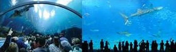 Major public Aquariums